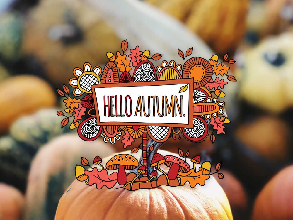 Tazi hello-autumn-pumpkin